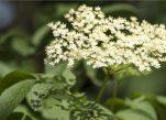 Ποιο μαγικό βότανο διώχνει 100% τα έντομα από πάνω σας με μια απλή επάλειψη.