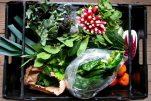 Φρέσκα φρούτα και λαχανικά εποχής στην Ελλάδα: Αναλυτικά τα προιόντα ανά μήνα