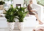 Φυτά εσωτερικού χώρου για καθαρό αέρα