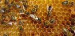 Από Αλτσχάιμερ μέχρι Αρθρίτιδα, οι μέλισσες βοηθούν σε όλα!!!