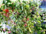 10 βότανα που γιατρεύουν