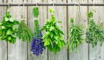 Τα βότανα που καίνε το λίπος: Δείτε όλες τις συνταγές! Αδυνάτισε ενώ κοιμάσαι!