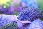 Βότανα: οι θεραπευτικές τους ιδιότητες ανά ασθένεια