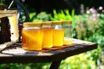 Πέντε λόγοι για να τρώτε μέλι