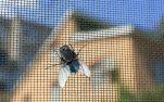 5+1 Φυσικοί Τρόποι για να διώξεις τις Μύγες από το Σπίτι σου!