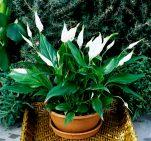 Τα φυτά που είναι βόμβες οξυγόνου – Πάρτε τουλάχιστον ένα στο σπίτι σας