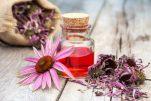 Εχινάκεια: Το βότανο που βοηθάει στην ενίσχυση του ανοσοποιητικού σου συστήματος