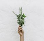 Τα βότανα που καίνε λίπος και οι συνταγές για κυτταρίτιδα, επίπεδη κοιλιά, έλεγχο όρεξης