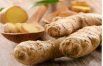 Πιπερόριζα ή τζίντζερ βότανο για βαρυστομαχιά, κρυολόγημα, χοληστερίνη, αρθρίτιδα, διαβήτη, δίαιτα